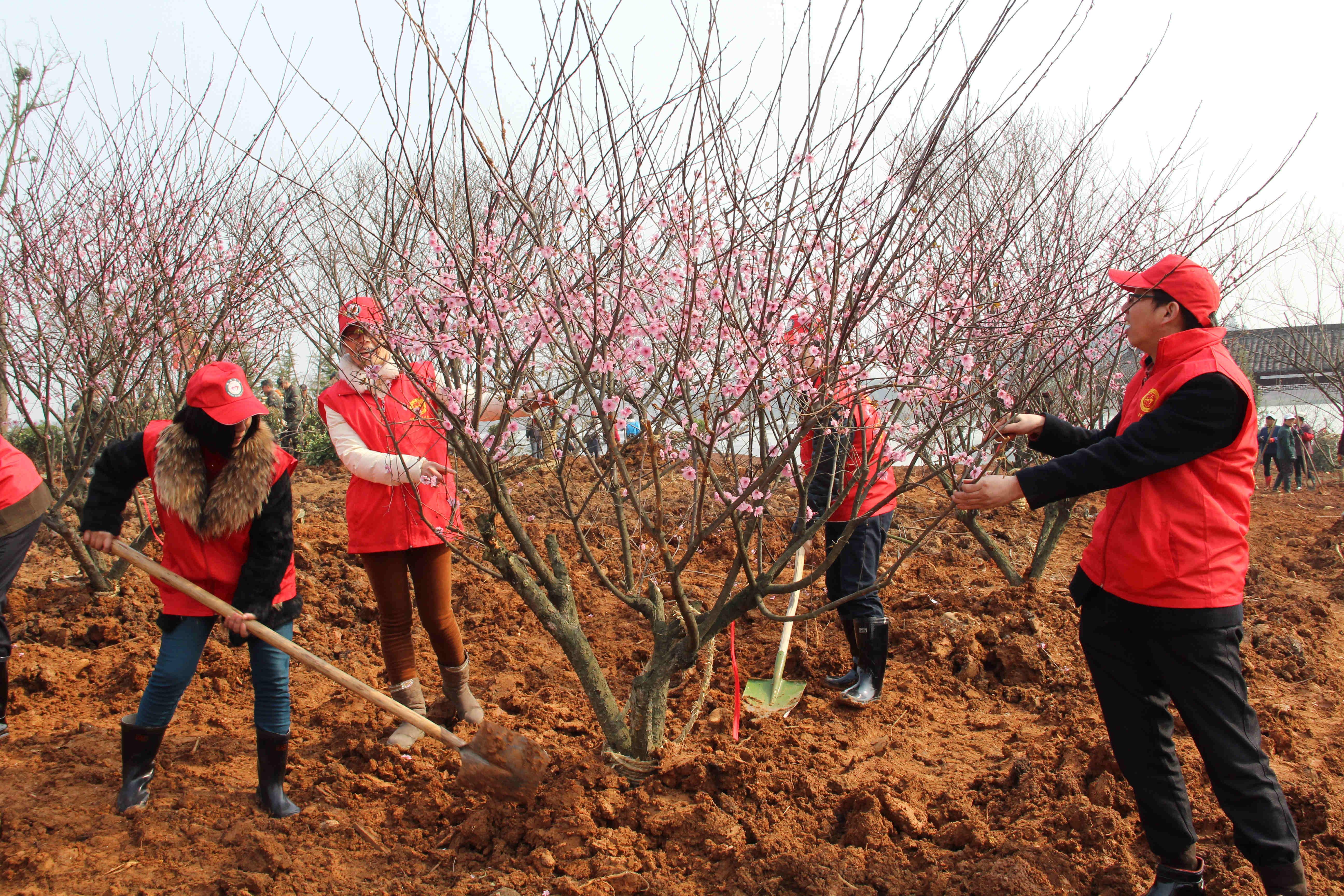 组织社工志愿者参加义务植树风采